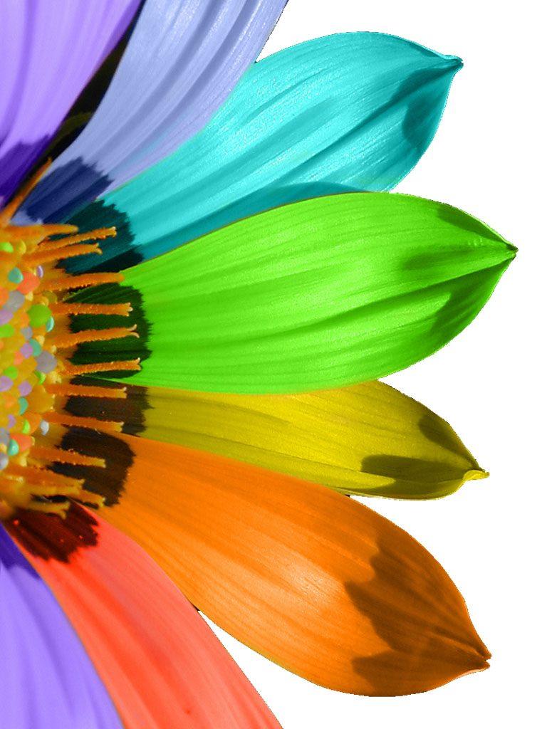 Bloem met veel gekleurde blaadjes